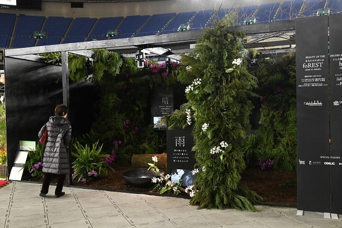 青山フラワーマーケット・ティーハウスなどをはじめとする屋内緑化で人気のparkERs(パーカーズ)。  ディスプレイ前面では、硬い直線の柱を隠すのではなく、それを使ってコニファーの葉で柔らかさを出し、白花のコチョウランで控えめな華やぎと動きを演出。