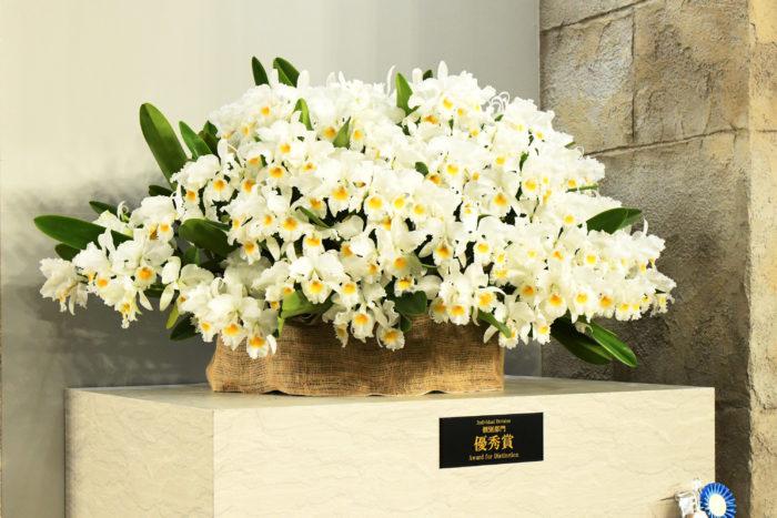 カトレア シュロデレー アルバ'ヘラクレス'  もう一つの優秀賞は、カトレアのシュロデレー アルバ'ヘラクレス'。出品者は群馬県の神保康紀さん。こちらも芯が黄色で、全体が白花。たくさんの花が、株を覆い尽くすほどにすき間なく咲いています。花芽をしっかり出させ、それをしおれさせることなく開花まで持っていく高い技術を感じます。そしてそれを実現するためには、日々の細やかな手入れをされている事が感じられます。