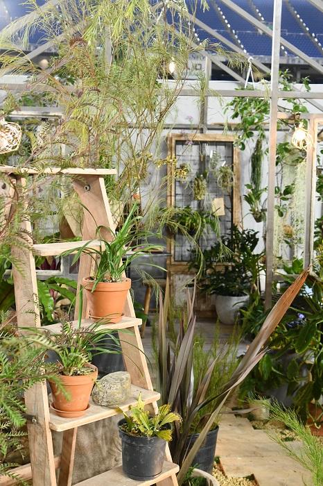 家の外は庭の草木が、中もグリーンでいっぱいという、植物好きには夢のような住環境。庭から家の中まで、暮らしのすべてをグリーンで包み込まれながら過ごせる住まいです。コトハは京都にある、グリーンいっぱいの店内に趣味のよい暮らしの品が並ぶ人気の雑貨店。それだけに、什器やガーデングッズ、グリーンまわりのアイテムのチョイスもセンスがよく、上手い見せ方で提示しています。