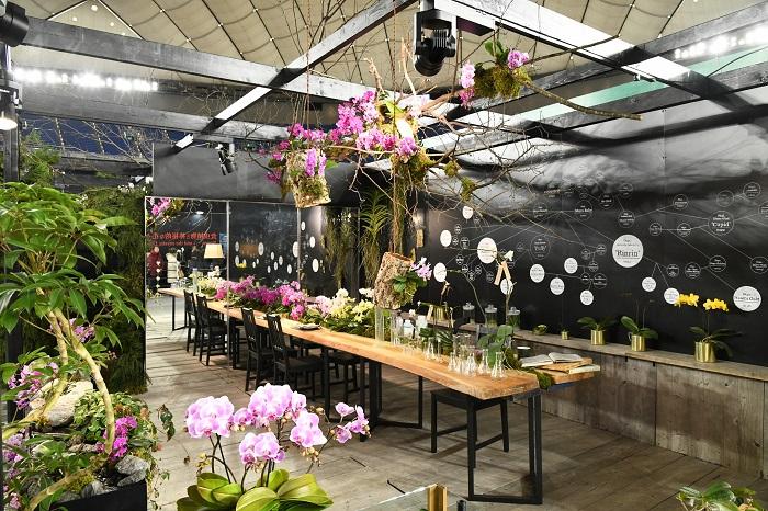 サイズ、花色、模様など多彩なコチョウラン品種を生み出し続けている椎名洋ラン園の展示。  黒を基調とし、テーブル天板、床、カウンターとぬくもりのある木の素材を使った、飲食店を思わせる空間。室内に配置するコチョウランの花色を白〜濃いピンクまでのグラデーションでまとめることで全体の統一感が生まれ、引き締まった印象を生んでいます。特に、濃い色を中心に使っているのが効果的。  華やかさに目が行くコチョウランですが、こんなシックな使い方もできますよというメッセージを感じる展示です。