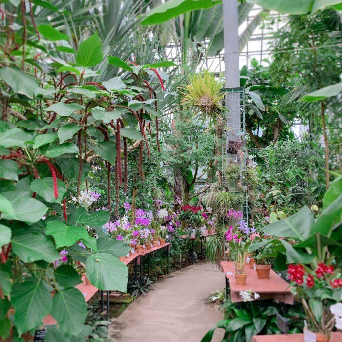 昨年11月、筑波実験植物園で開催されたラン展の様子