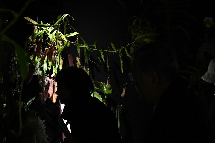 今回の世界らん展からは、ランとその他の植物を絡めた主催者展示も大きな見どころ。