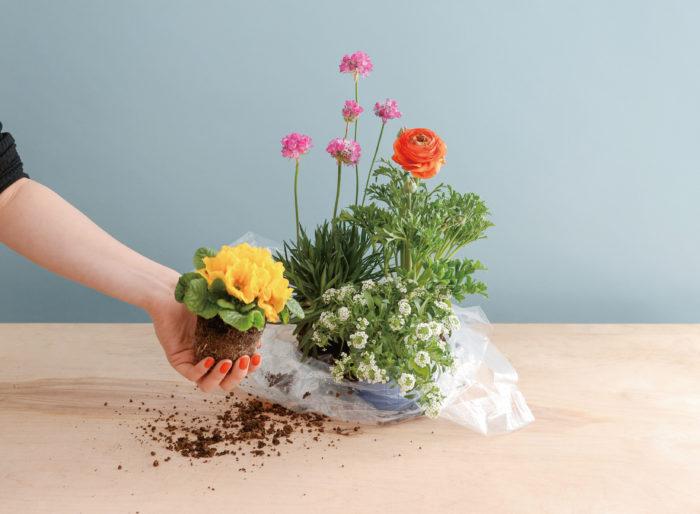 今回の表紙はオフィスにてセットを組んでの撮影。  イキイキした様子が出るよう土の撒き方、花の位置にもこだわりました。ネイルはラナンキュラスの花と同じ色のオレンジです!ブルーに良く映えます。  編集部の乙女心が溢れています。