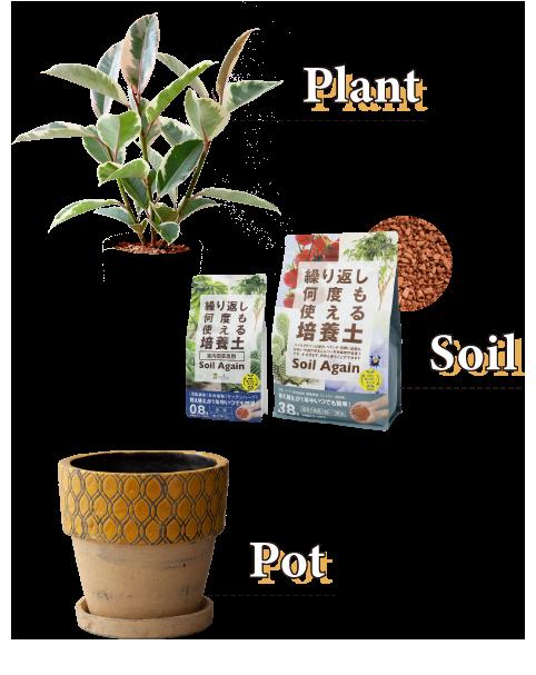 Pot,Plant,Soil