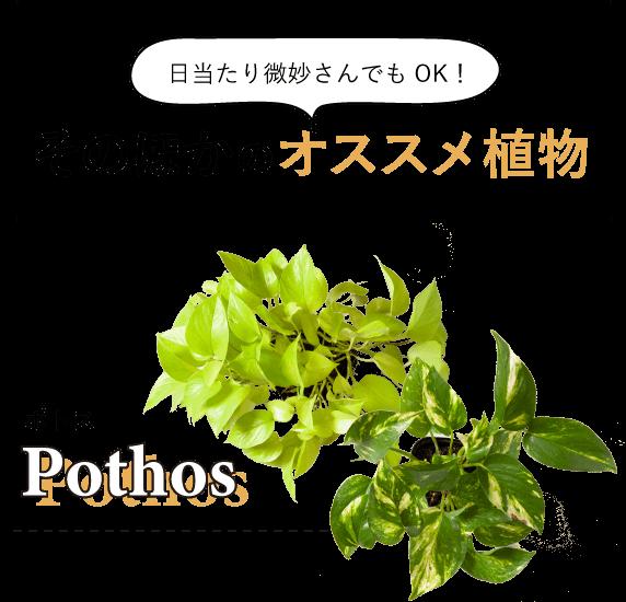 日当たり微妙さんでもOK!そのほかのオススメ植物 ポトス