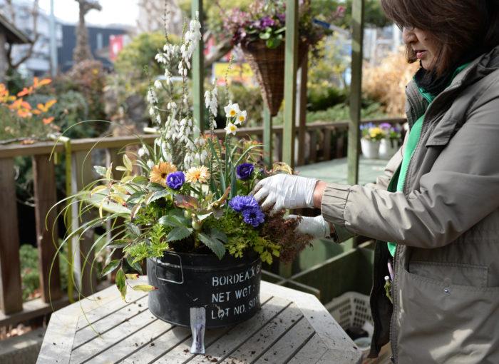 溢れ出す花や草の造形が美しい土屋先生の寄せ植え、ポイントは苗選びだとか。真新しい綺麗に整えられた苗よりも、少し時間の経った苗の方が色づいていたり魅力が増していて、寄せ植えのアクセントにぴったりなのだそう。  「お店の端に実はいい苗があったりするんです」と土屋先生。  先生の活動情報はブログ「この植物をお買い2」をチェック!