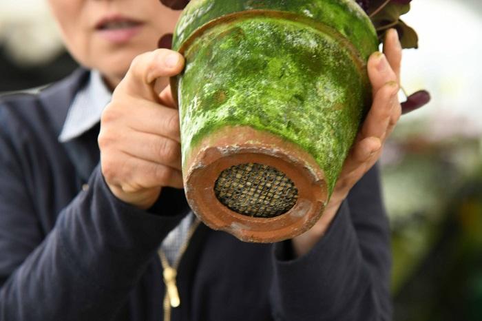 日本の山野草の中には最近の猛暑の中で育てるのには工夫が必要な種類もたくさんあり、暑さ対策についてもシクラメンに応用できました。たとえば、暑さが苦手な植物は、鉢底穴が大きい鉢で水はけが苦手な植物は、鉢底穴が大きい鉢で水はけ良く育てるのも山野草栽培の技術から応用できるコツの一つです。