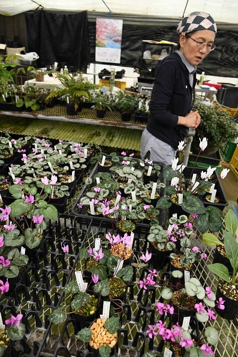 なんとかしたいと思い、千葉県よりも夏に涼しいところで育った植物であれば、仕入れた株を育ててタネを採り苗から育てなおしたり、一度夏越しを経験させたりして環境にあった株を販売するよう心がけました。買ってくださってもすぐにダメになってしまうような株では困りますよね。