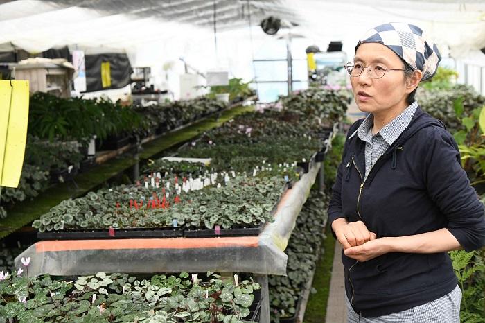 夫は環境調査など植物や自然に関わる仕事をしていて、もう一歩踏み込んで植物を自分で育てる仕事をしたいという気持ちをもっていました。  山野草店を開く前は神奈川に住んでいて、私も普通の事務員として勤め、それ自体に不満はありませんでした。  しかし、野山を歩いて植物のことをより知るようになり、家でも植物に触れる機会がふえると、タネをまいたり株分けをしたりして、何かを生み出す仕事というのもいいなと思うようになりました。  今は千葉で山野草店をやっていますが、その前は神奈川県の一軒家を借りて住んでいました。家には庭があったので、3坪ほどのビニールハウスを建てて植物を育て、趣味と兼ねながら山野草店を開く準備をしていました。  最初は住んでいる場所から近い神奈川県内で山野草店を開く土地を探していたのですが、手の届く金額で売りに出ている土地は傾斜地がほとんどで、こちらで希望するような平坦な土地ではありませんでした。  土地を探しているうちに、千葉県の外房であれば比較的手に入りやすいことに気づき、現在の場所に決めました。もともと店の名前を縁起の良い「つるかめ」と付けようと決めていたので、ここ長生村(ちょうせいむら)は「ながいき」とも読むことができご縁があるとも思ったのです。18年ほど前のことです。