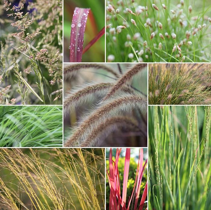 オーナメンタルプランツという言葉がだいぶ浸透して使われるようになってきたように思います。葉の色や形状が特徴的で庭の中で存在感を放つ植物のことを言います。  オーナメンタルグラスというと、同じように印象的な草です。それそのものが単体でも存在感を放つような印象的な草たち。  実は乾燥に強い、あるいは乾燥が大好きな植物には、このオーナメンタルグラスが多いんです。この乾燥に強くてかっこいいグラス類たちを紹介します。