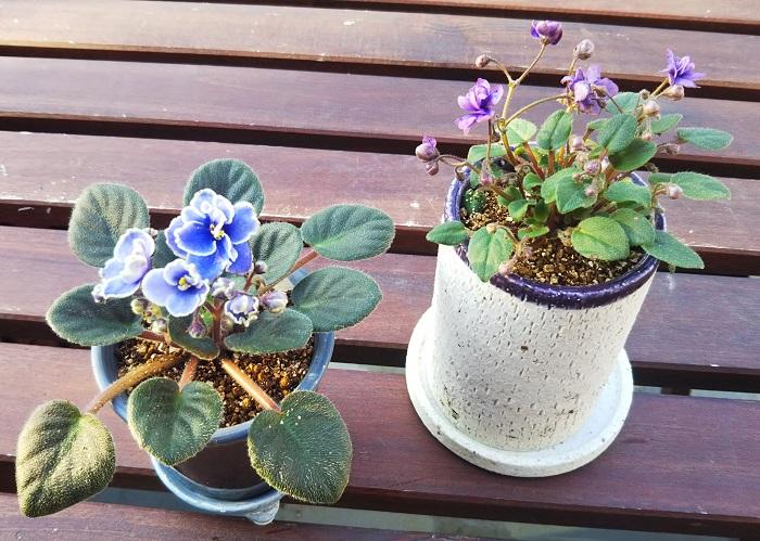 植え替え完了です。やっぱり植え替えると一味違ってさらに愛着がわきますね。  花が終わったら、手で摘み取りましょう。終わってしまった花を取ることで、次の花を次々に咲かせることができます。