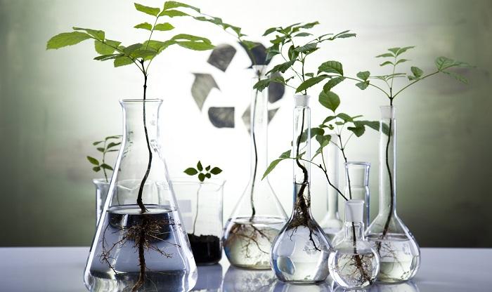 「植物を育ててみたい!でもマメじゃないし、育てられるか自信がない・・・」わかります。何を隠そう、この記事を書いている私も、育てることがとにかく苦手、水やりも忘れてしまいがちです。そんな私でも続けられたのがこの方法!ハーブや観葉植物の葉や枝を水に挿しておくだけで、そこから発根し育成が可能な種類があります。気が付いたタイミングで水を交換するだけで育つので、植物を置きたい、しかし枯らしそうで怖くて買えない、鉢物を買うまでの勇気がない!というあなたにおすすめです。数か月、うまくいけば年単位でそのまま管理ができる場合もあります。