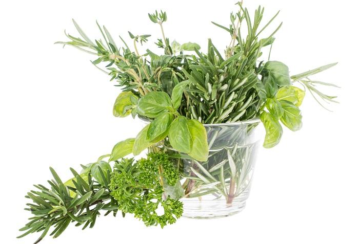 茎をカットして水挿しで発根(根が出てくること)したら、土やハイドロカルチャーを入れた容器に植え替えてあげると更によく育ちます。