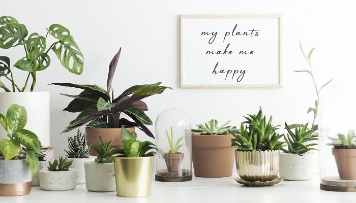 ミニサイズな手のひらサイズの植物がかわいくておすすめです。ミニサイズなので、いくつか並べておいてもかわいいですし、トレイやかごにまとめて入れておくのも素敵です。