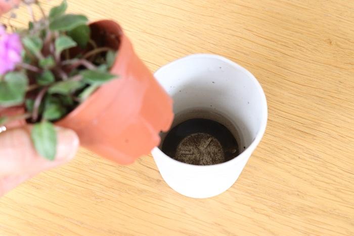 ミニセントポーリアを購入してきたままで育てる場合、水やりをすると鉢カバーに水がたまります。  根腐れや病害虫予防のため、水やりの際に鉢カバーや受け皿にたまった水は必ず捨てるようにしましょう。