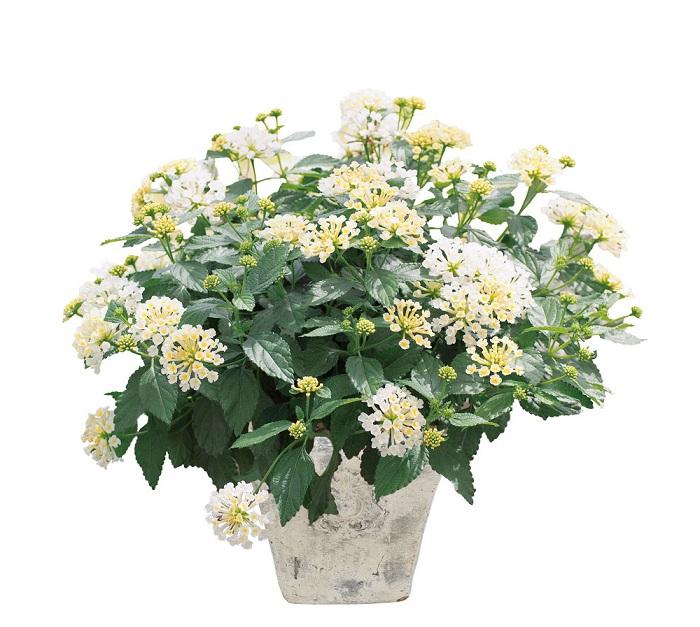 ※お花をクリックするとPW取り扱い店が検索できます!