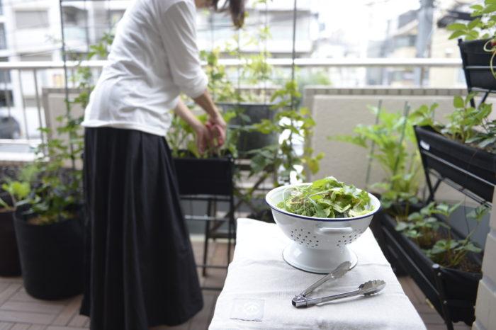 休日の朝、ベランダで収穫した野菜を朝食で使えたらなぁ、なんて考えたことはないでしょうか?家庭菜園の第一歩は作物に適した環境を知ることからはじまります。  あなたのお家のベランダは、どんな環境でしょうか?お家の環境に合わせてプランター向きなのか、畑向きなのかなども記載してあります。