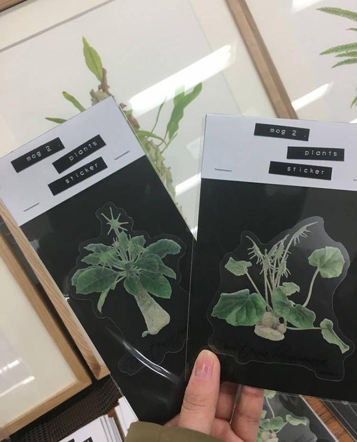 アリ植物以外にも、植物画のステッカーもあります。種類が色々あるのでじっくり悩んでください。