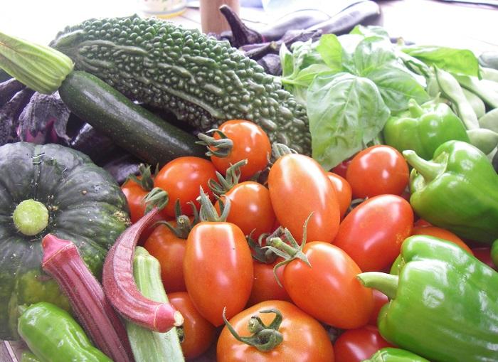 アグリス成城で夏に収穫された野菜たち。つやつやしています。自分で育てた野菜は新鮮さプラス、愛おしさも増して美味しいこと間違いなし!