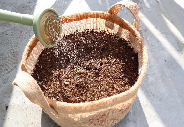 種をまく前にしっかりと土を湿らせるため、鉢の底から流れ出るくらい水をかけておきます。