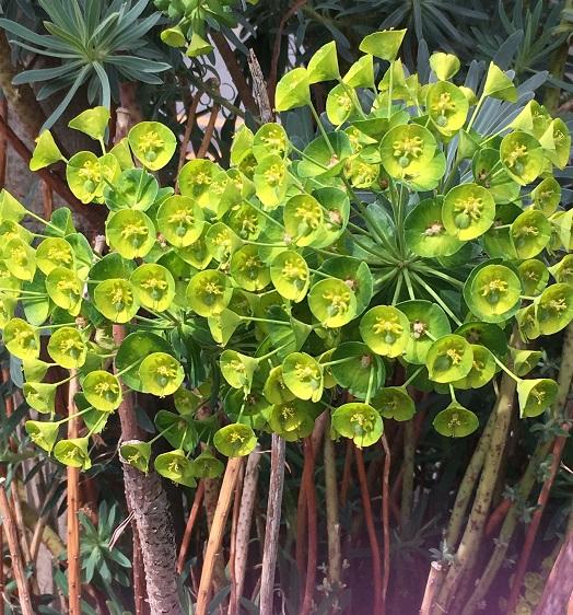 種類によって葉の色、形、花丈などが多様です。フォルムがユニークなので目を引く存在になります。