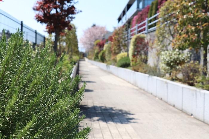 入口を入り、駐輪場の脇の通路をまっすぐ進んでいきます。通路には、ローズマリーやタイムなどのハーブ、ブルーべーりやスモークツリー、マンサクなどの木が美しく育っていて、季節を感じとても癒されます。