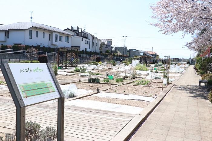 通路の先には、広い青空の下に広がる菜園!