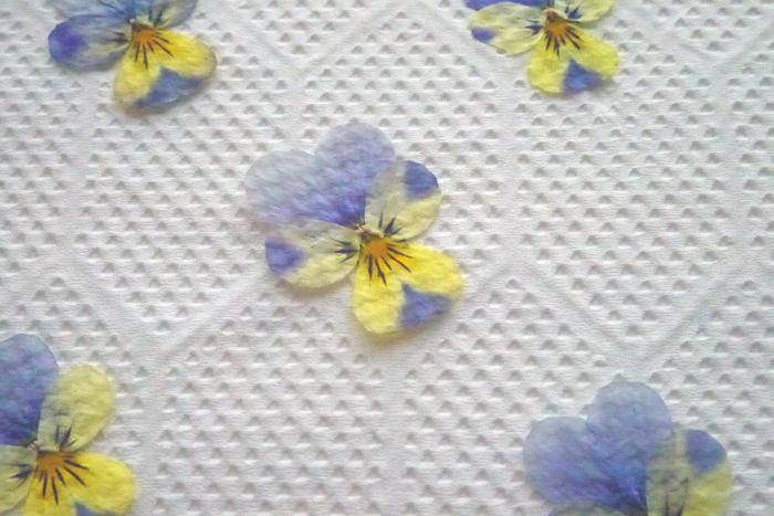 この工程を3~5回ほど。時々タオルと紙をめくって様子を確認しながら進めます。花がぱりっとしたら完成です。