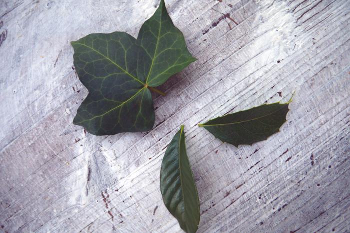 スケルトンリーフ(葉脈標本)にしたい葉っぱたち 今回使用したのはアイビー、クチナシ、ヒイラギモクセイの3種類です。・ゴム手袋 手が荒れるので、必ず着用しましょう 歯ブラシ(葉肉をこそげ落とすのに使用します。柔らかいものと硬いものと2種くらいあると便利です) 重曹 大さじ3 水 400cc