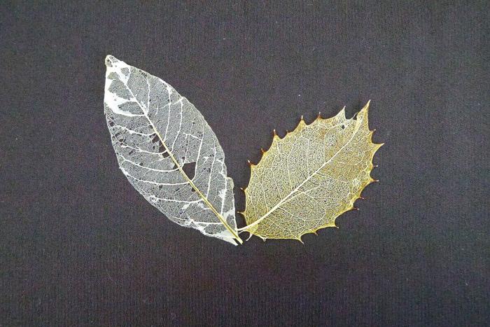スケルトンリーフや葉脈標本と呼ばれています。葉の葉肉を取ってしまって、葉脈だけにしたものです。落ち葉の中や、水たまりで葉脈だけが剥き出しになった葉を見たことはありませんか。自然が作り上げたレースのような繊細さが魅力的なスケルトンリーフ(葉脈標本)を自分の手で作ってみましょう。