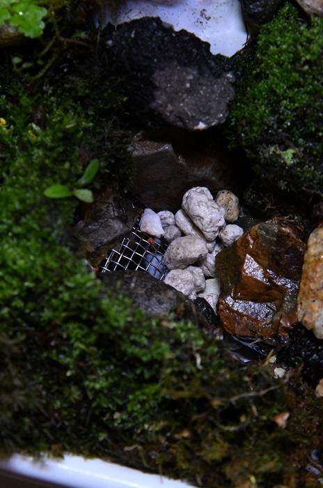 穴には洗面台用の網をつけ、その上に軽石を敷いています。さらにその上に石を配置して、すき間に苔を入れています。  園芸店などで販売されている苔には土がついていますが、使う前に土はよく洗い流したり、ココヤシチップや水苔に刻んだ苔をまいて増やしたものを使い、土がタンクに入らないようにしています。