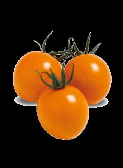 ミニトマト オレンジ千果