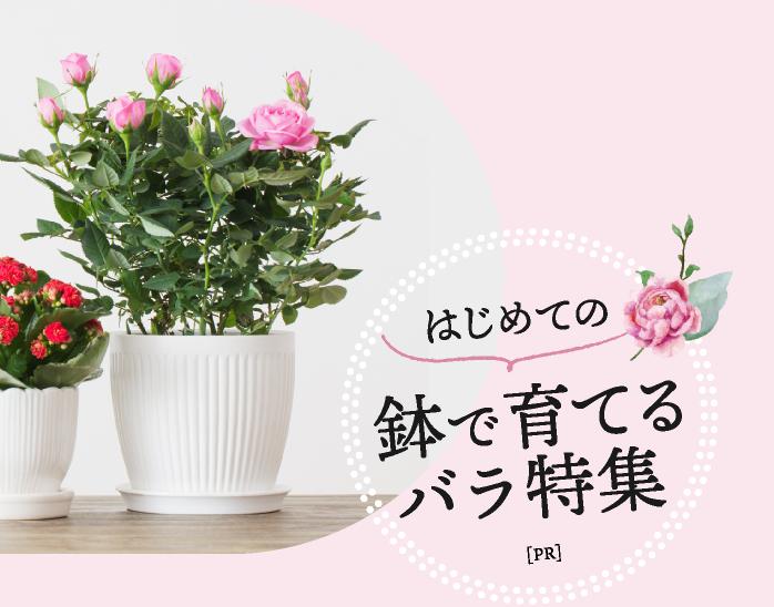 はじめての鉢で育てるバラ特集[PR]