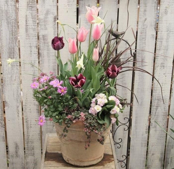 Photo by:井上まゆ美ピンク系の濃淡をシックな赤黒で引き締め、甘いだけにならないように植えた寄せ植えです。11月にチューリップと春咲グラジオラスの球根と草花を植え込み、春に咲きそろいました。