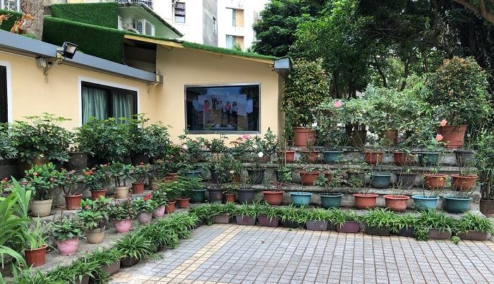 端にはバラの鉢とハナキリンの鉢、オリヅルランに似た植物などの鉢がずらりと並び、増やしているようです。