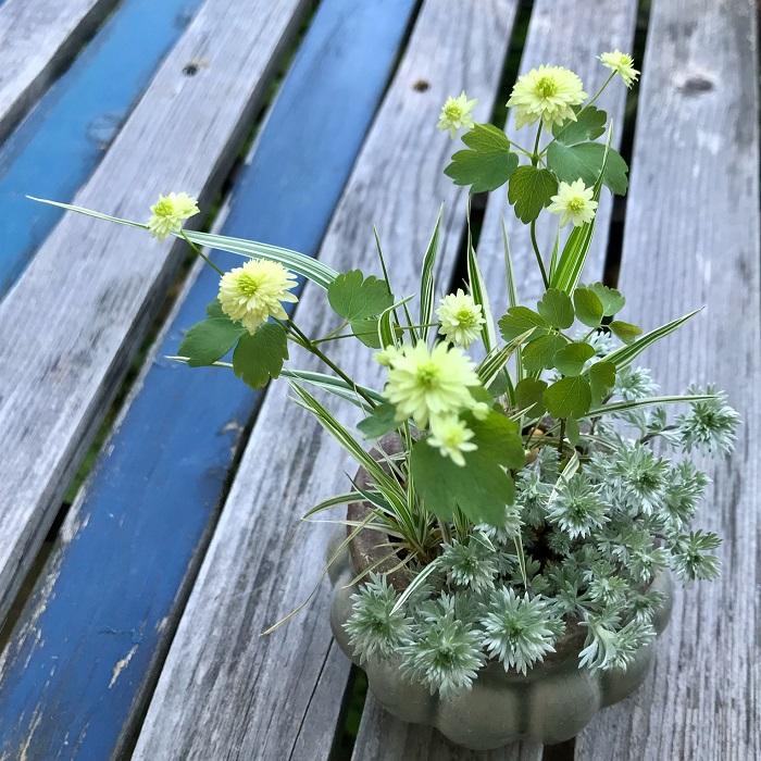 Photo by:今村久美子梅花唐松・八重緑にアサギリソウやクサヨシを合わせました。繊細でフワッとした寄せ植えにしました。