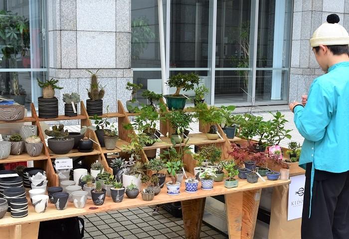 KIDORIさんオリジナルの観葉盆栽や多肉盆栽がいくつも展開されていました。