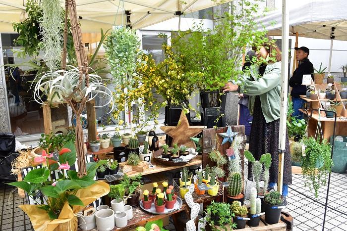 植物のある暮らしをもっと身近にをコンセプトに全国より選りすぐったハイセンスな植物や鉢・雑貨を販売されているBotanical56さん。今回は新緑の枝物やモッコウバラなどの切り花の他、サボテンなどのインドアプランツ、器の販売です。