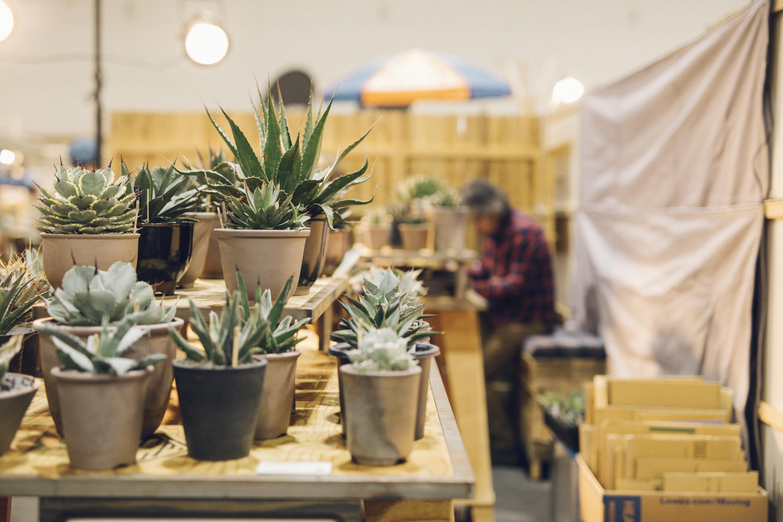 アメリカ産アガベを中心に、さまざまな品種を販売! 当日はPCPオリジナル伝市鉢の販売もあります。