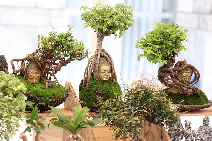 東京盆栽生活空間さんには、盆栽の新しい楽しみ方を教えてもらえます。マニアにもたまらないですね。