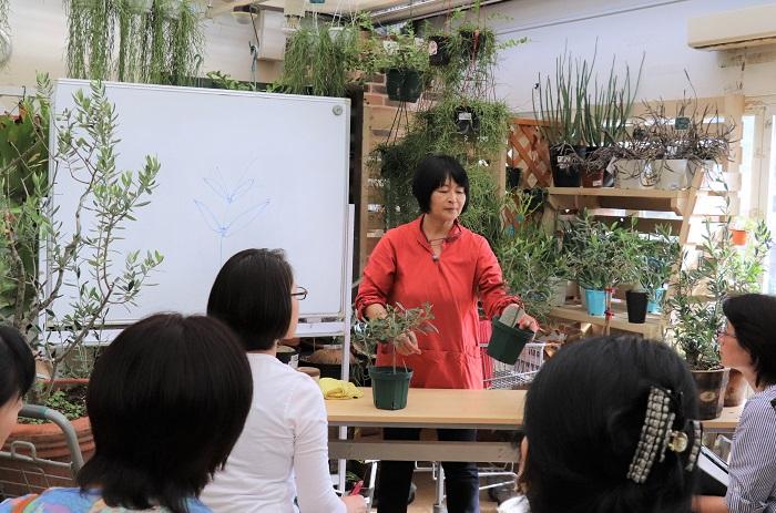 撮影協力:プロトリーフガーデンアイランド玉川店  「プロトリーフガーデンアイランド玉川店」と「京成バラ園」では定期的にオリーブの講座を行っています。福島県郡山市の「森の風ラボ」や、沖縄でオリーブの講座をすることもありますよ。