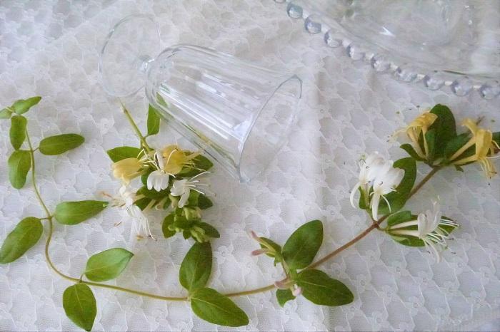 スイカズラ(忍冬)の名前が付いたカクテルをご存知ですか?ハニーサックル・カクテルという名前のショートカクテルです。このカクテルの特徴は蜂蜜が使われているところ。  カクテルにスイカズラ(忍冬)の花が使われているわけではありませんが、名前が使われているというだけでちょっと親近感が湧きます。