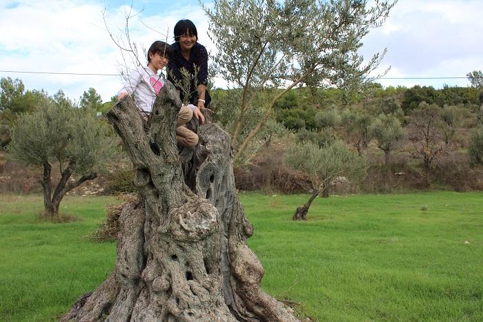 写真提供:岡井路子  オリーブを好きな理由は言葉で言い表せないくらい、DNAレベルで好きです。(笑) ずっとオリーブの木とたわむれていたい感じです。オリーブと友達になりたい。そして親友になりたい。と思っています。  私がオリーブに興味を持った頃に「オリーブの本」が出版されていなかったので、様々な場所に行ってオリーブのことを聞いてわかったことを本にして出したいと思ったんです。でも、当時はオリーブ単体で本を出してくれる出版社がなくて、友人や知人に1口いくらの個人出資を相談して出版することができたんです。その後、大手の出版社からも「オリーブの本」を出してほしいと言ってもらえるようになり、「ほら、オリーブいいでしょ~!」って感じです。(笑)