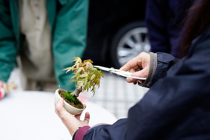 紅葉の盆栽について、購入前に管理のことを説明。剪定のこと、落葉のことなどみんな真剣に聞いていました。