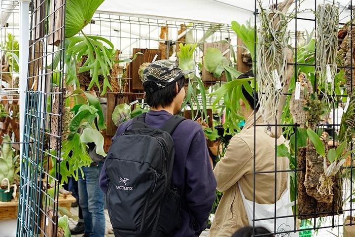 主にビカクシダ、ラン、ティランジアなどの着生植物とミニ盆栽を取り扱うnecomossさん。 この日もビカクシダを中心に様々な植物が並んでいました。同じビカクシダでも性質は異なるので真剣に吟味される方も。