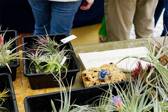 ティランジアをはじめ、各種ブロメリアと多肉植物、球根植物などを取り扱うSPECIES NURSERYさん。