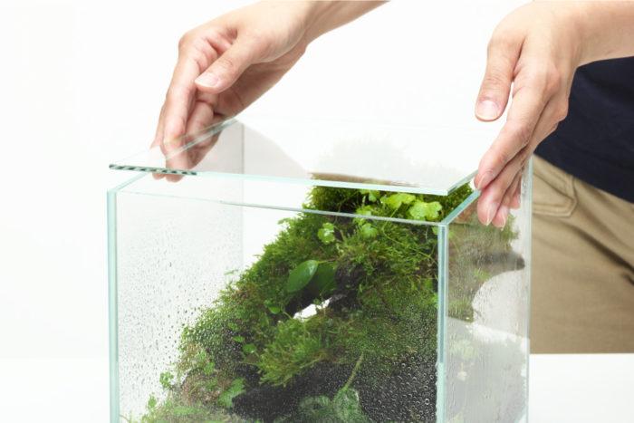 ネオグラス エアに水を張って水草を水中で楽しむことはもちろん、専用ガラスフタを使用することで、水草の水上栽培や熱帯雨林植物など高湿度を好む植物の育成も楽しめます。