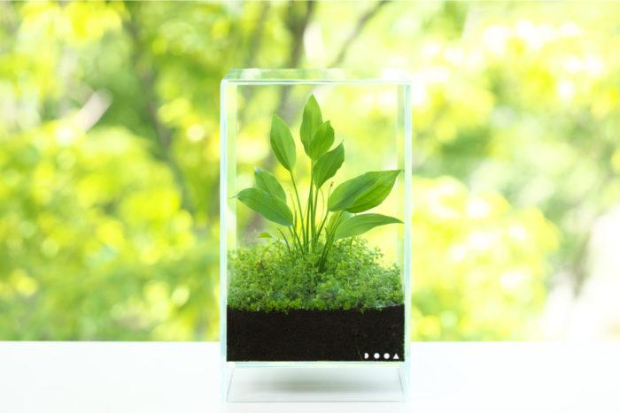 セット後は、植物が乾燥しないように専用ガラスフタを用いて保湿し、直射日光が当たらない明るい窓辺に置きましょう。また、蒸れないようフタをずらし、適宜、湿度の調整をしてください。