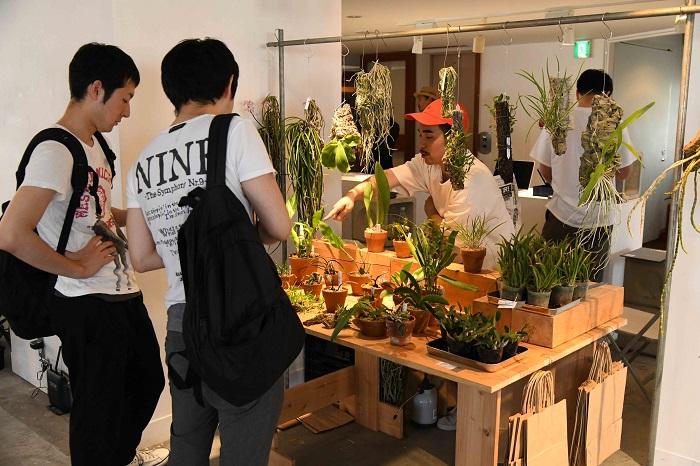 現代的な生活空間で楽しめるランを提案するmoku。  今回も着生させたものを中心に、様々なランをラインナップしていました。  ティランジアやビカクシダなどの着生植物をすでに育てている人の中で、次に何か別の植物を育ててみたいと思っている人たちが気になり始めている着生ラン。  キロスキスタやセイデンファデニア・ミトラタなど、花が無いときでも株姿が楽しめるランが人気のようでした。  最近人気急上昇中の「タケノコ系」のラン、フレッドクラーケアラも注目を集めていました。