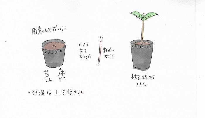 4.用意しておいた苗床に枝を埋めていきます。 この時使う土は、庭の土や畑の土ではなく、新しい清潔な土にしましょう。挿し木用の土があればそれを使っても大丈夫ですし、赤玉土の目が細かい土があればそれをおすすめします。